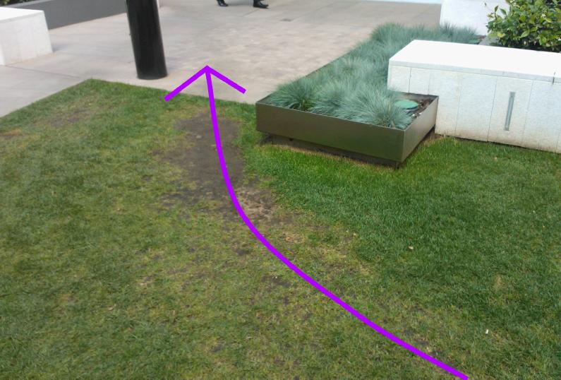 desire line in grassed area